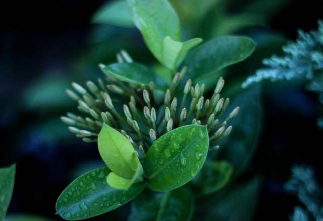 fioritura  640x438 - fioritura