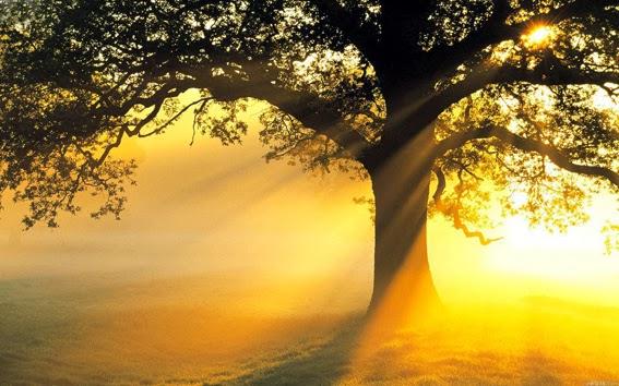 Serate di Luce, meditazione guidata